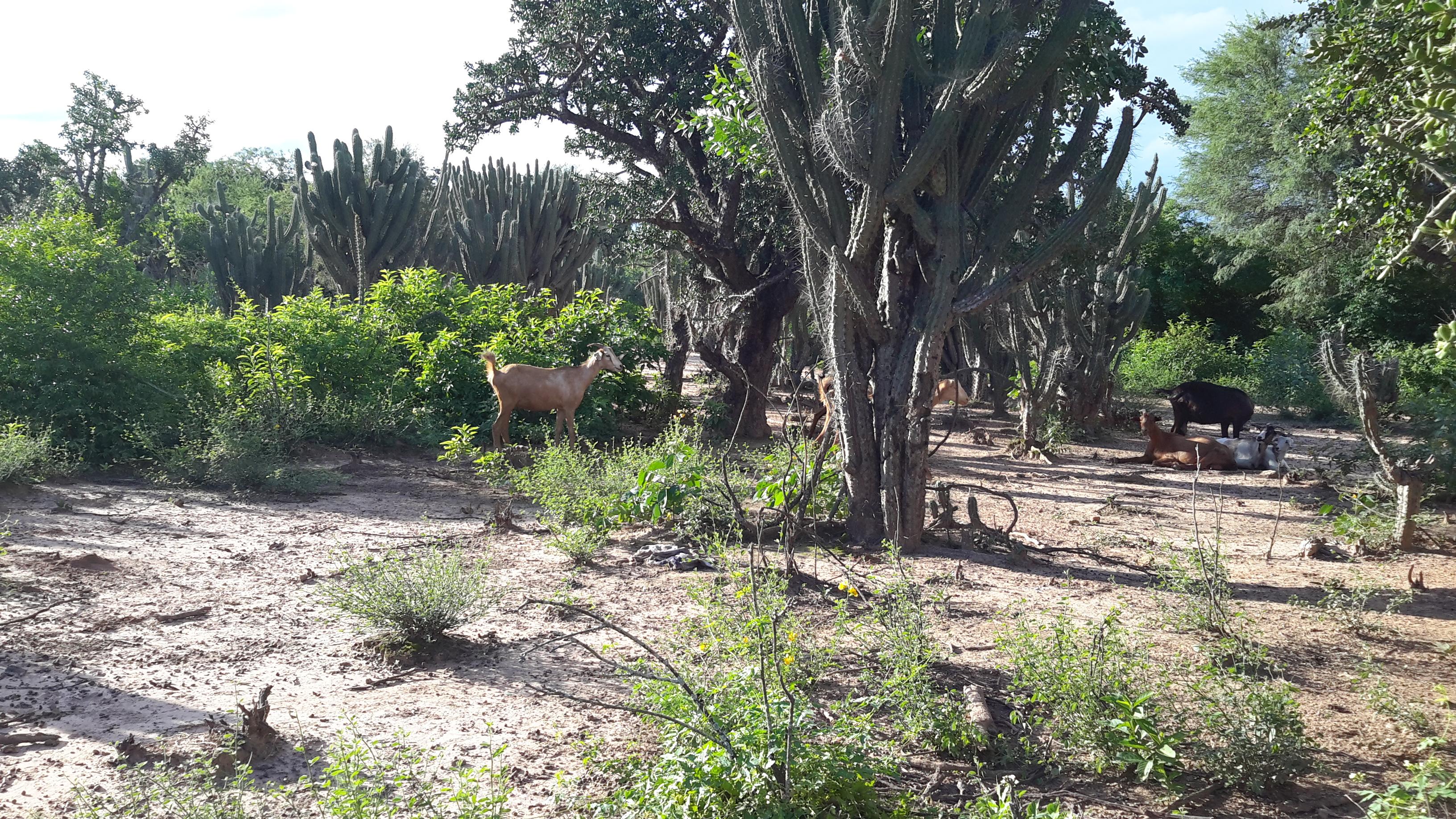 Chaco landscape