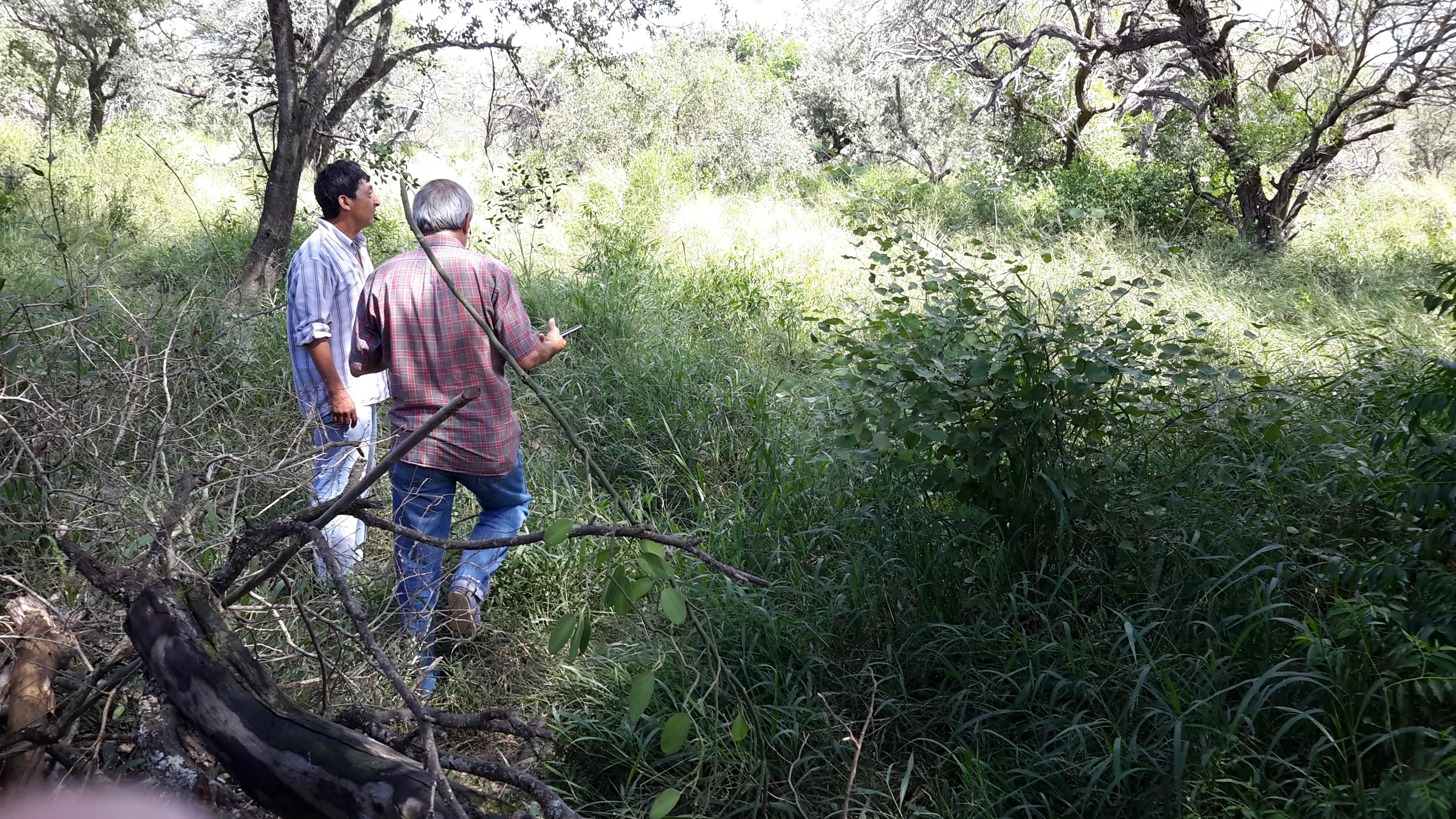 Assessing rangelands