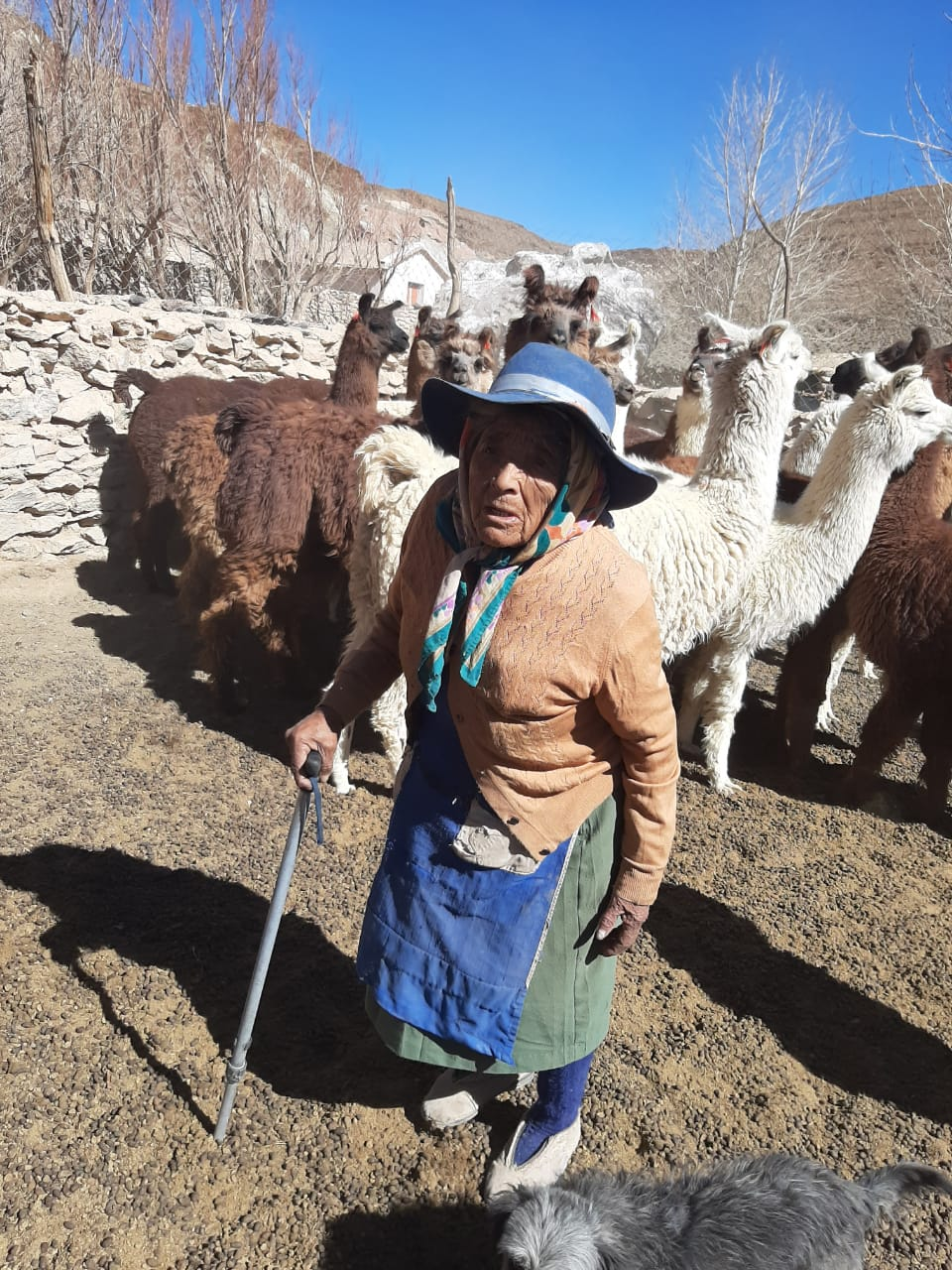 Woman herder in Argentina