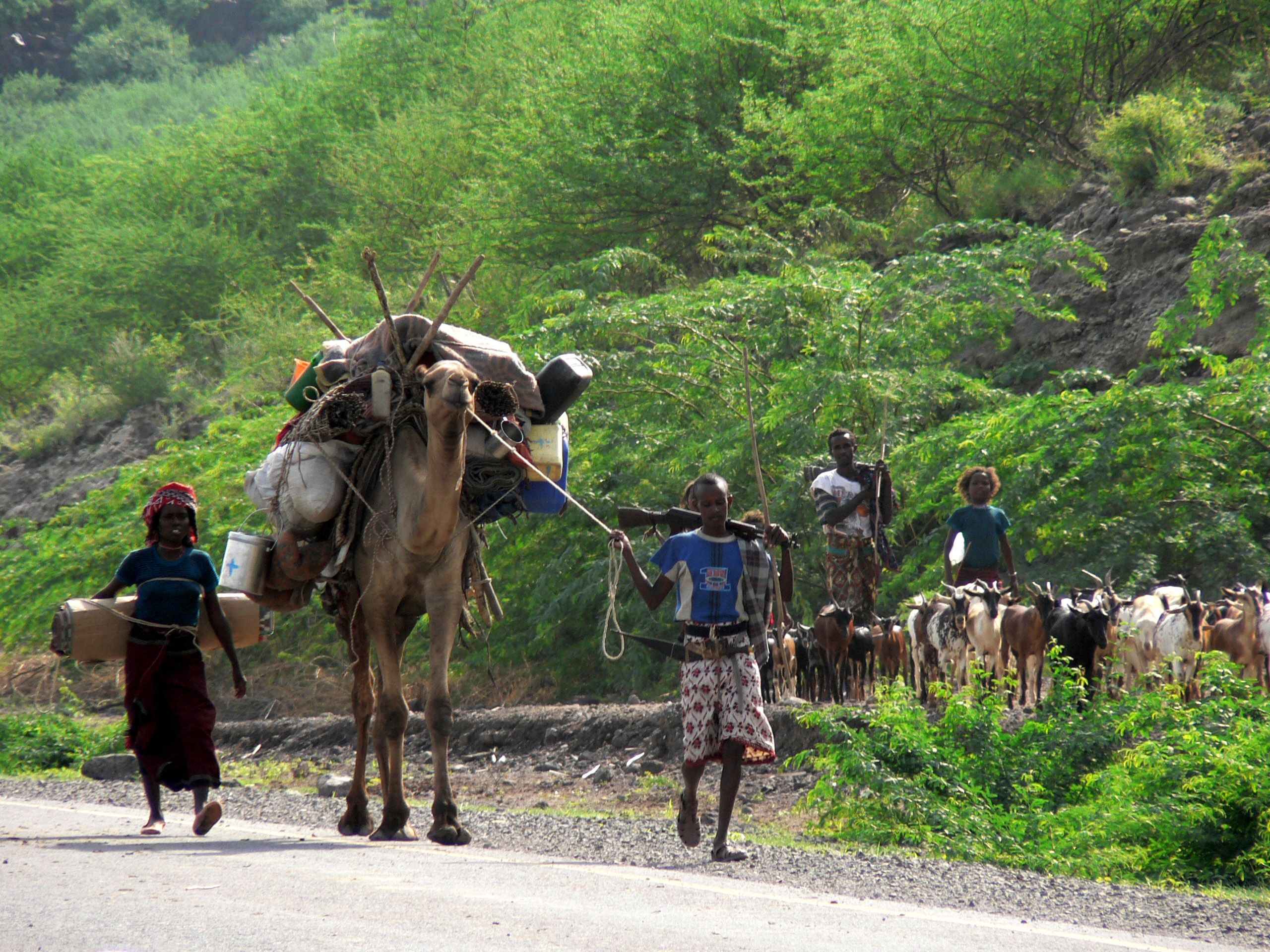 Afar family with camel on move