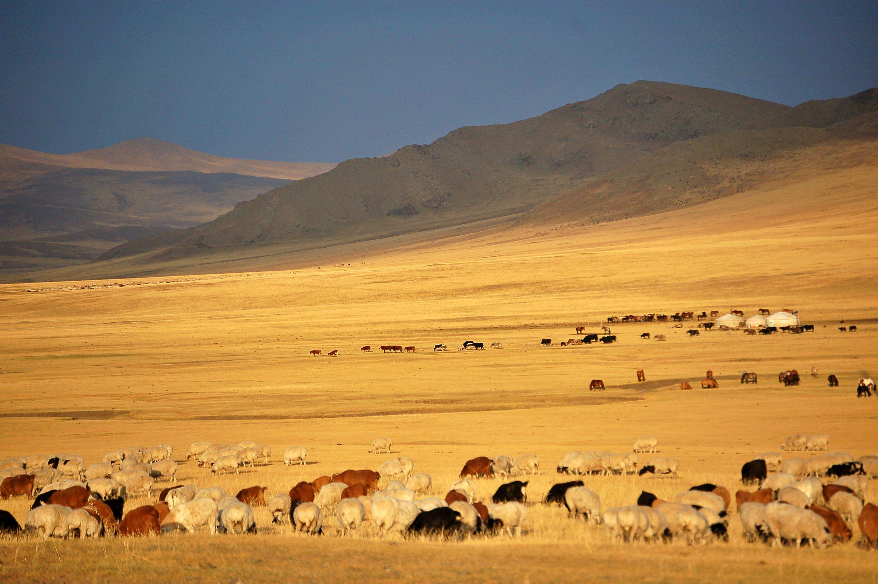 Herd on golden range