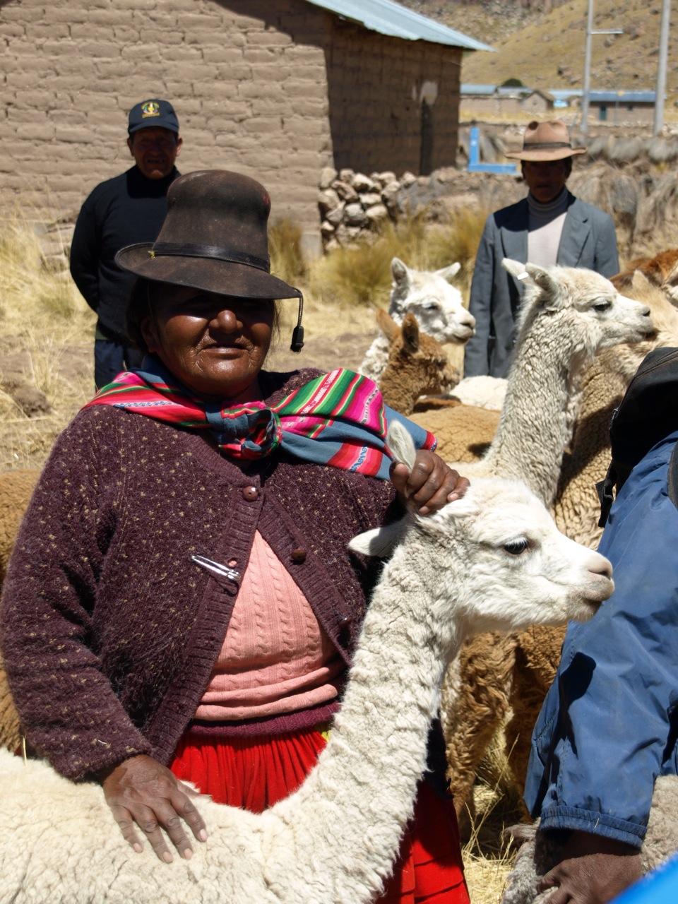 Woman and llamas