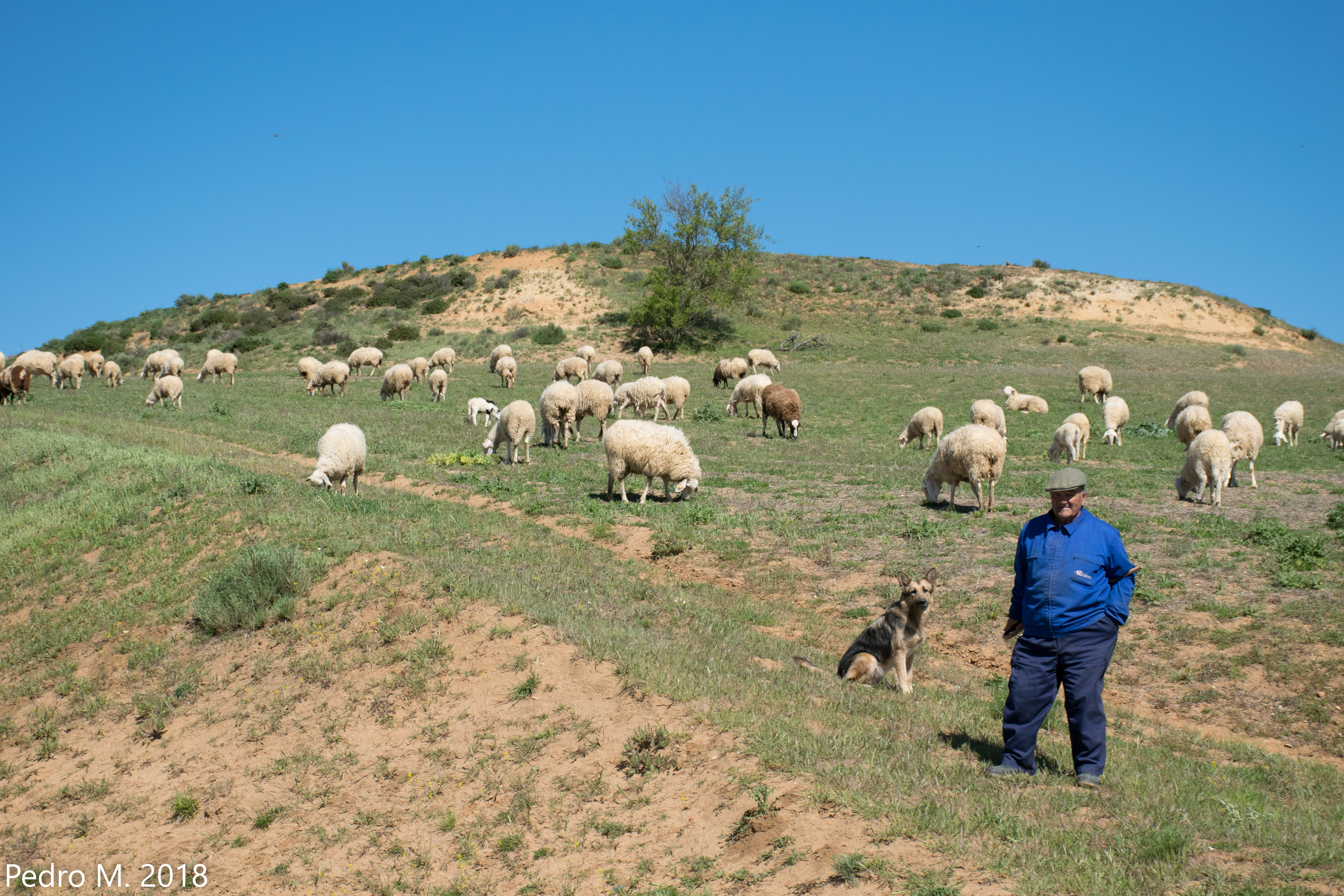 Herder on hill