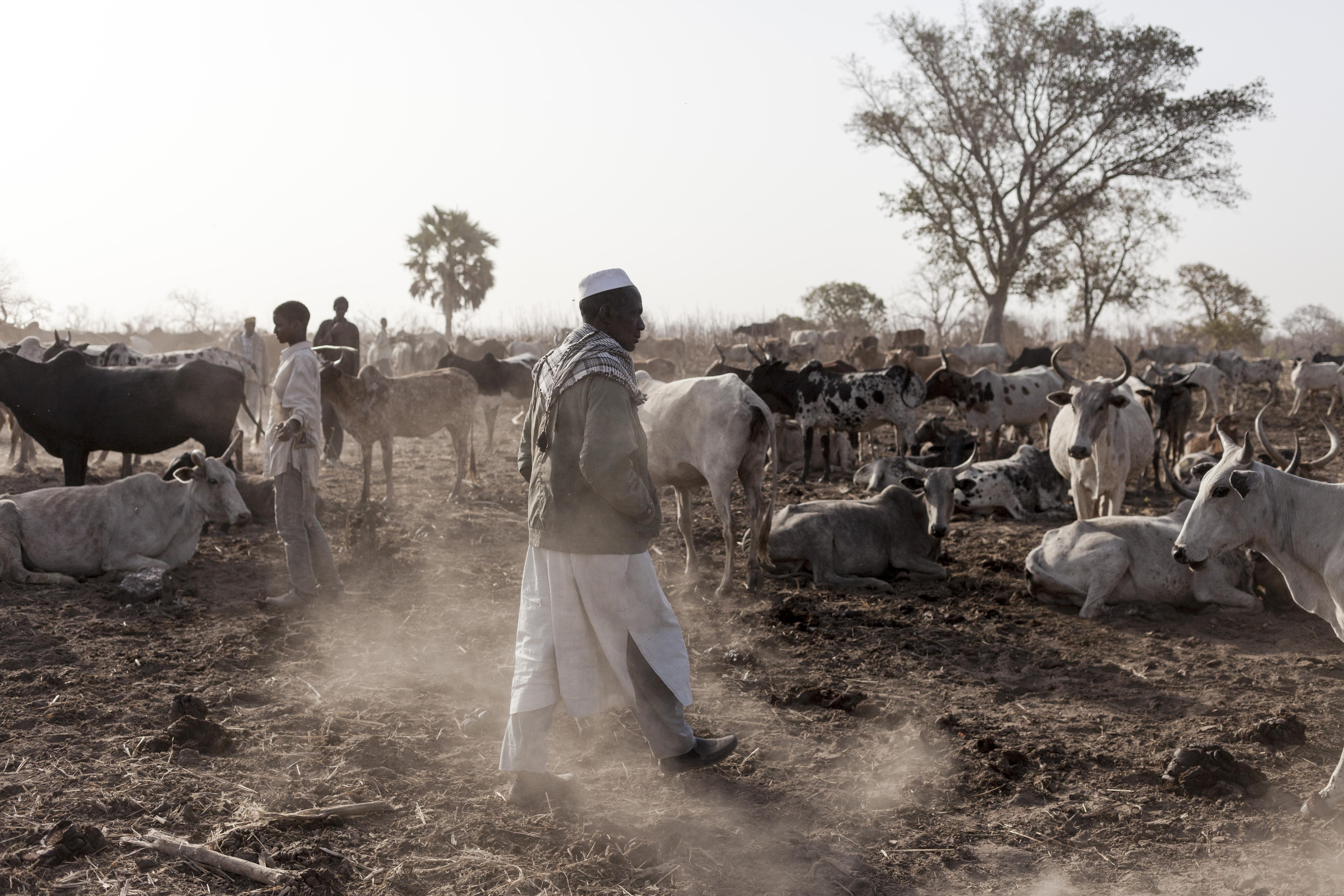 Cattle camp in Togo