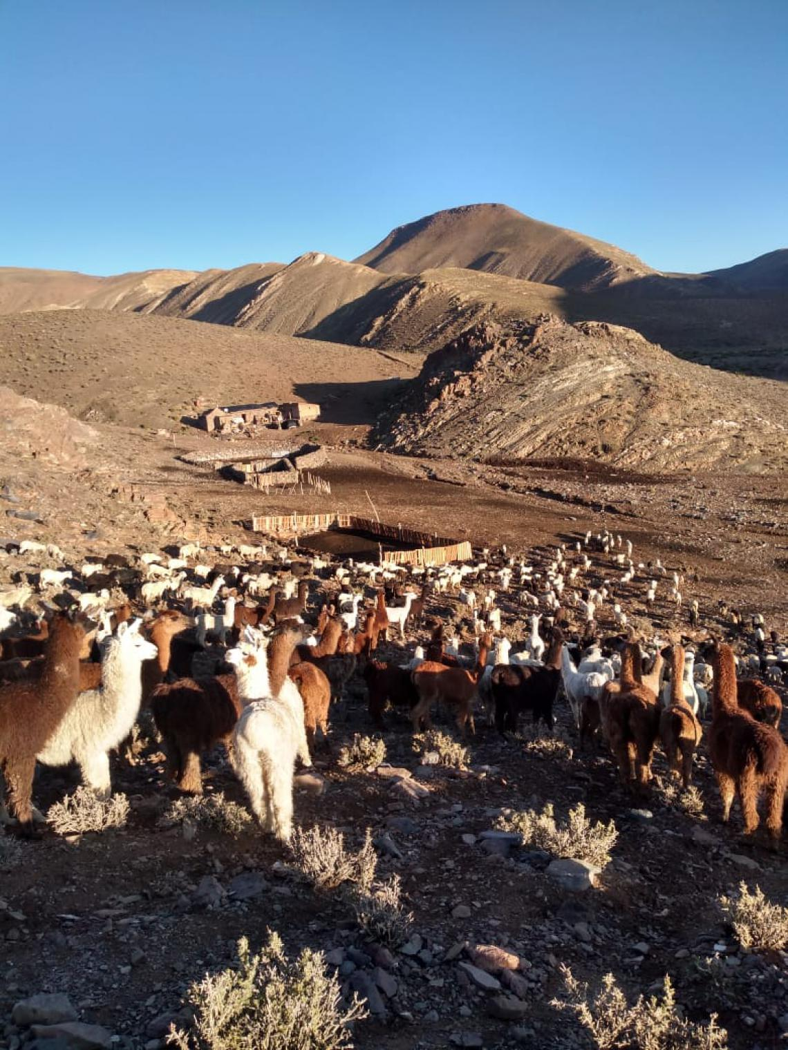 Herd in mountains