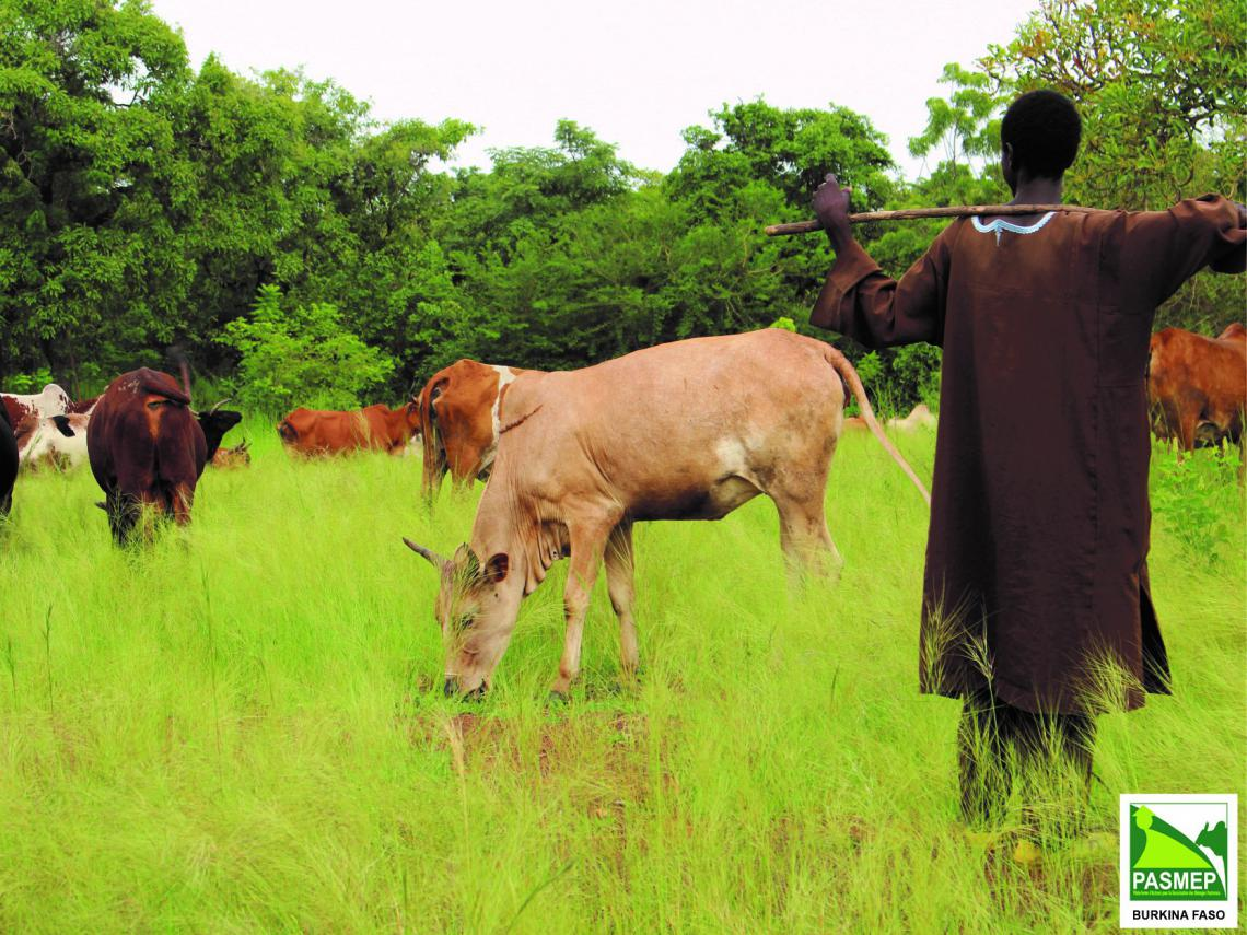 Herder and cows in grass