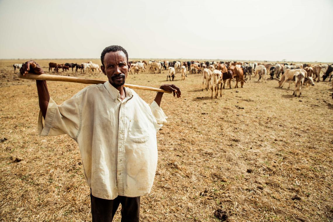 Older herder