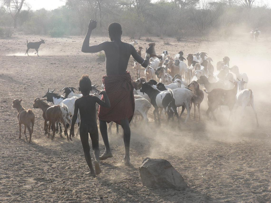 Man and boy herding goats