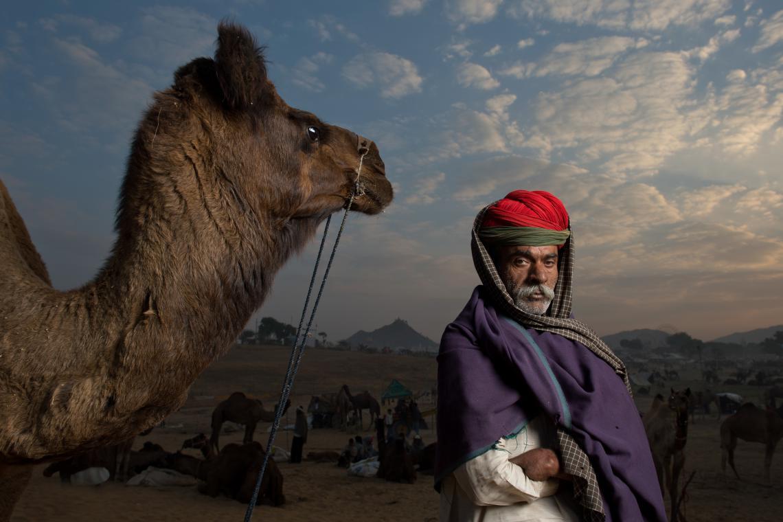 Indian herder at dusk