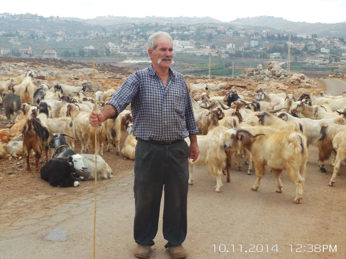 Pastoralist in Lebanon