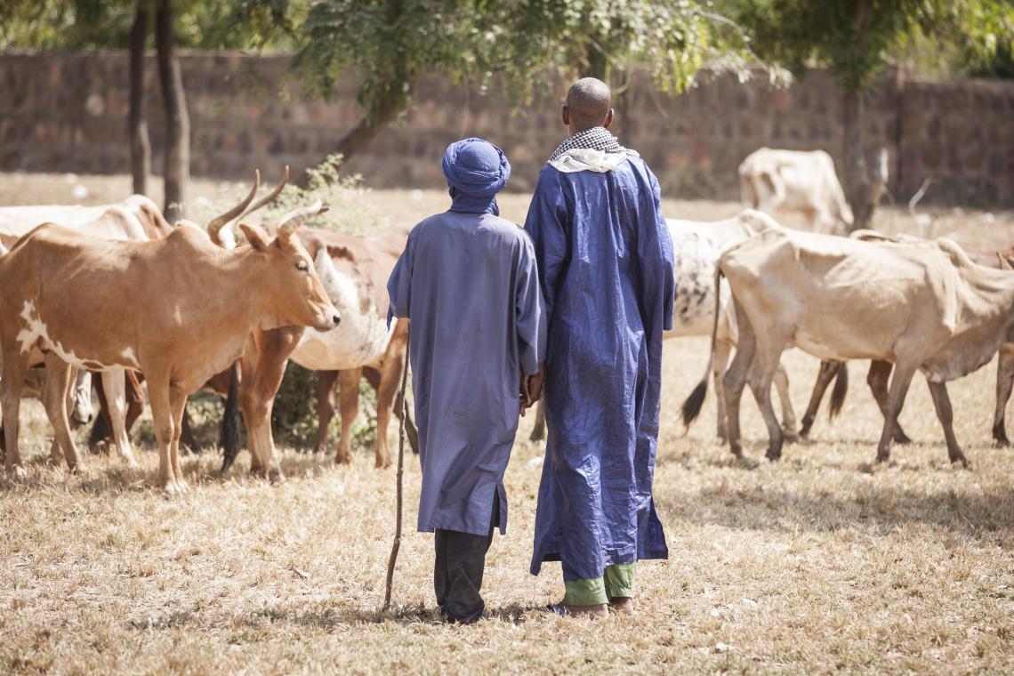 Herders in blue