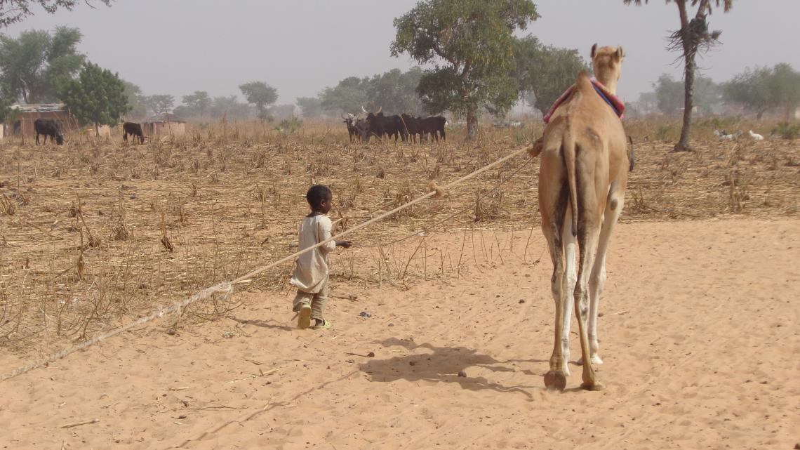 Child and camel