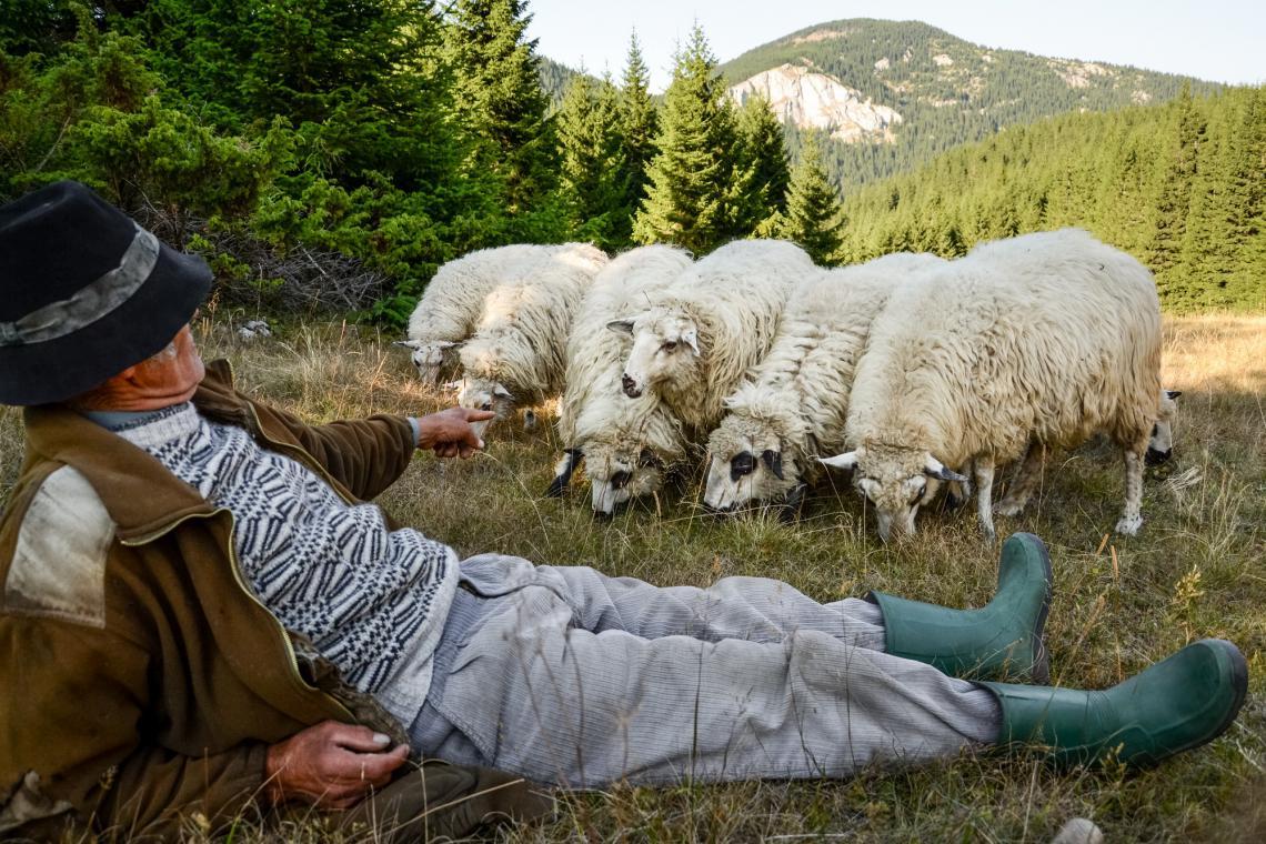 Romanian shepherd