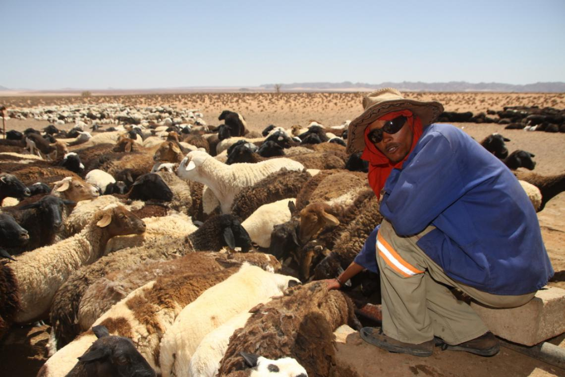 Herder with sunglasses