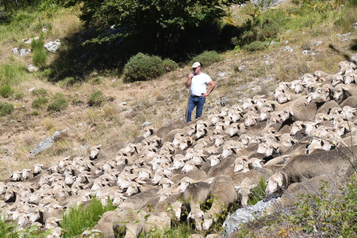 Spanish herder on slope