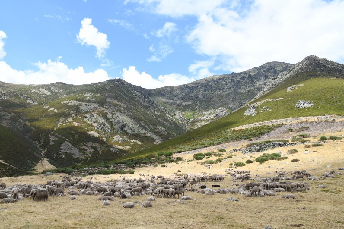 Flock in valley