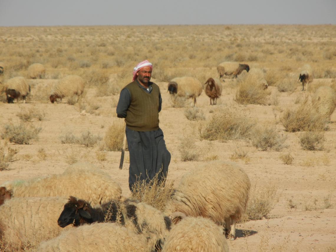 Syrian pastoralist