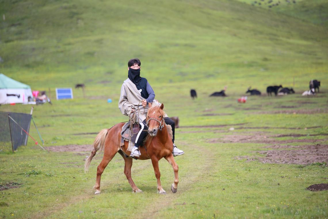 Tibet herder on horse