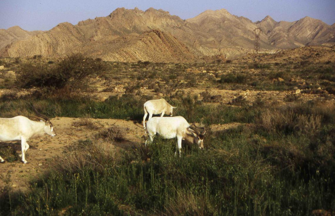 Wildlife Morocco